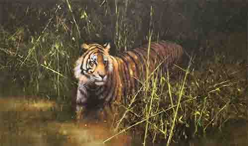 david shepherd into the sunlight comes a tiger print