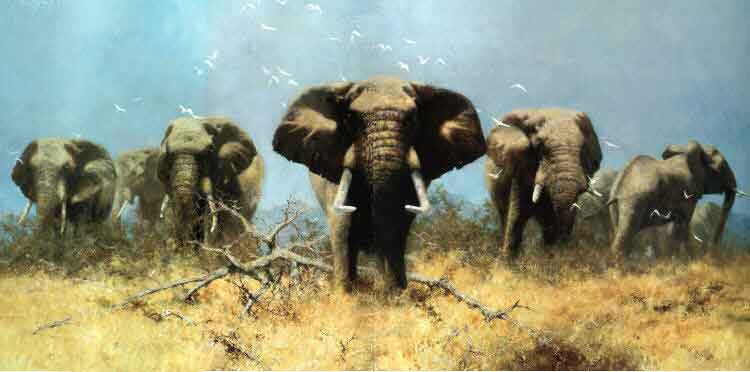 just elephants david shepherd