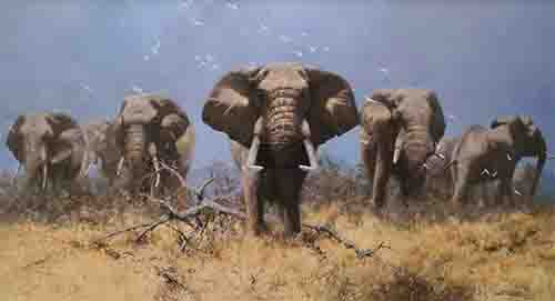 david shepherd just elephants elephant print
