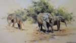 david shepherd kilaguni babies elephants print