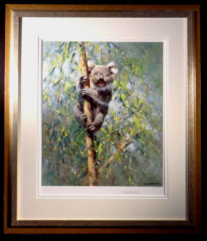 david shepherd Koala