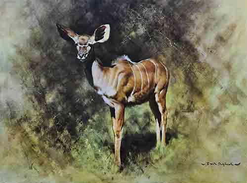 david shepherd kudu print