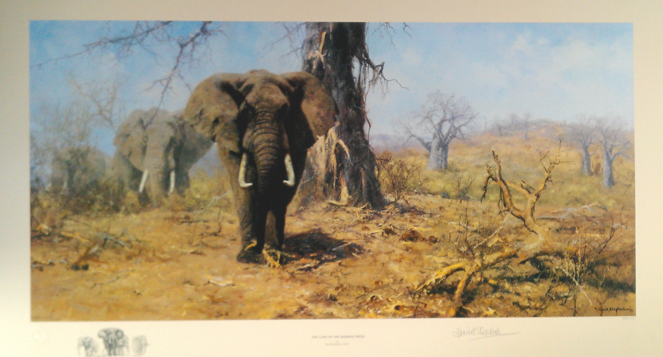 david shepherd land of the baobab trees print