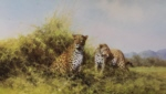 david shepherd leopards, silkscreen, print