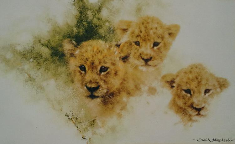 davidshepherd lion cubs