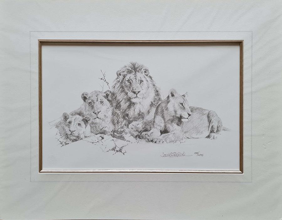 david shepherd lions pencil print