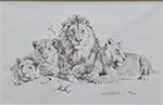 david shepherd lions pencil sketch print