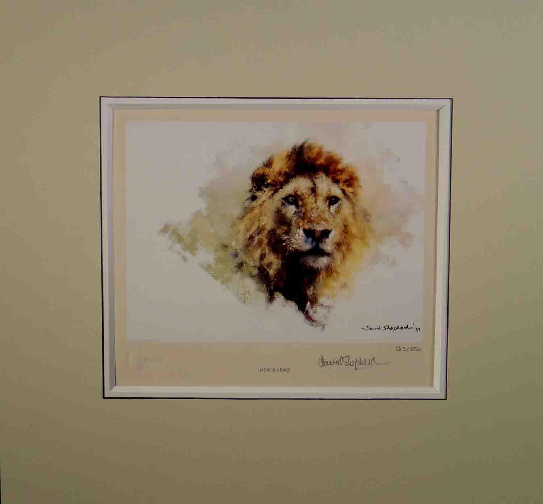 david shepherd, Lion's Head, signed, limited edition, print