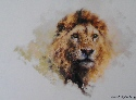 david shepherd lion head 1983 print
