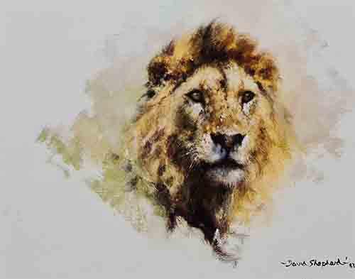 david shepherd Lion head print