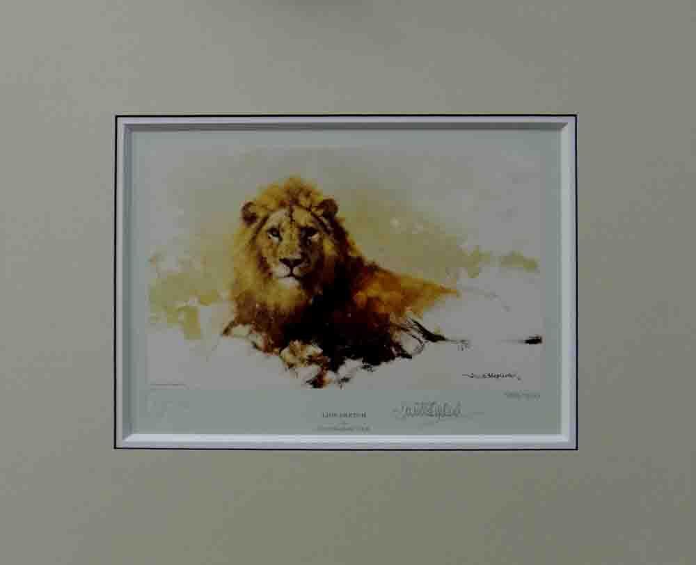 david shepherd, lion sketch 1986