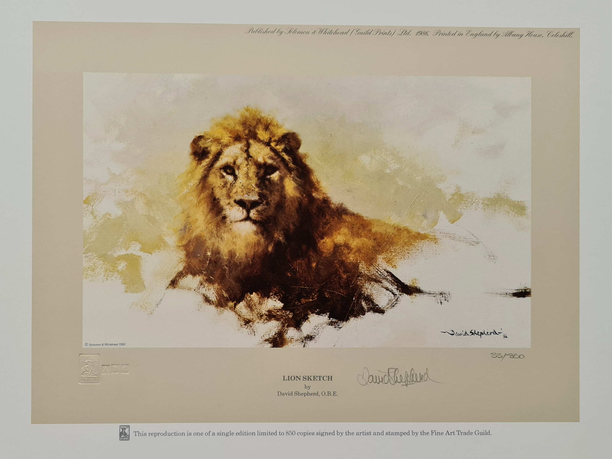 david shepherd, lion sketch