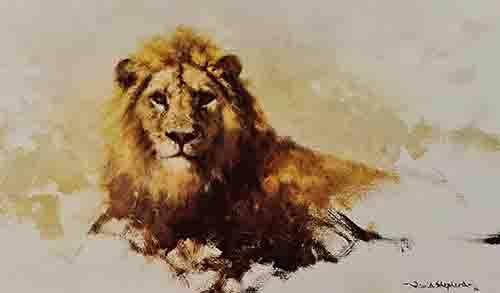david shepherd lion sketch 1986 print
