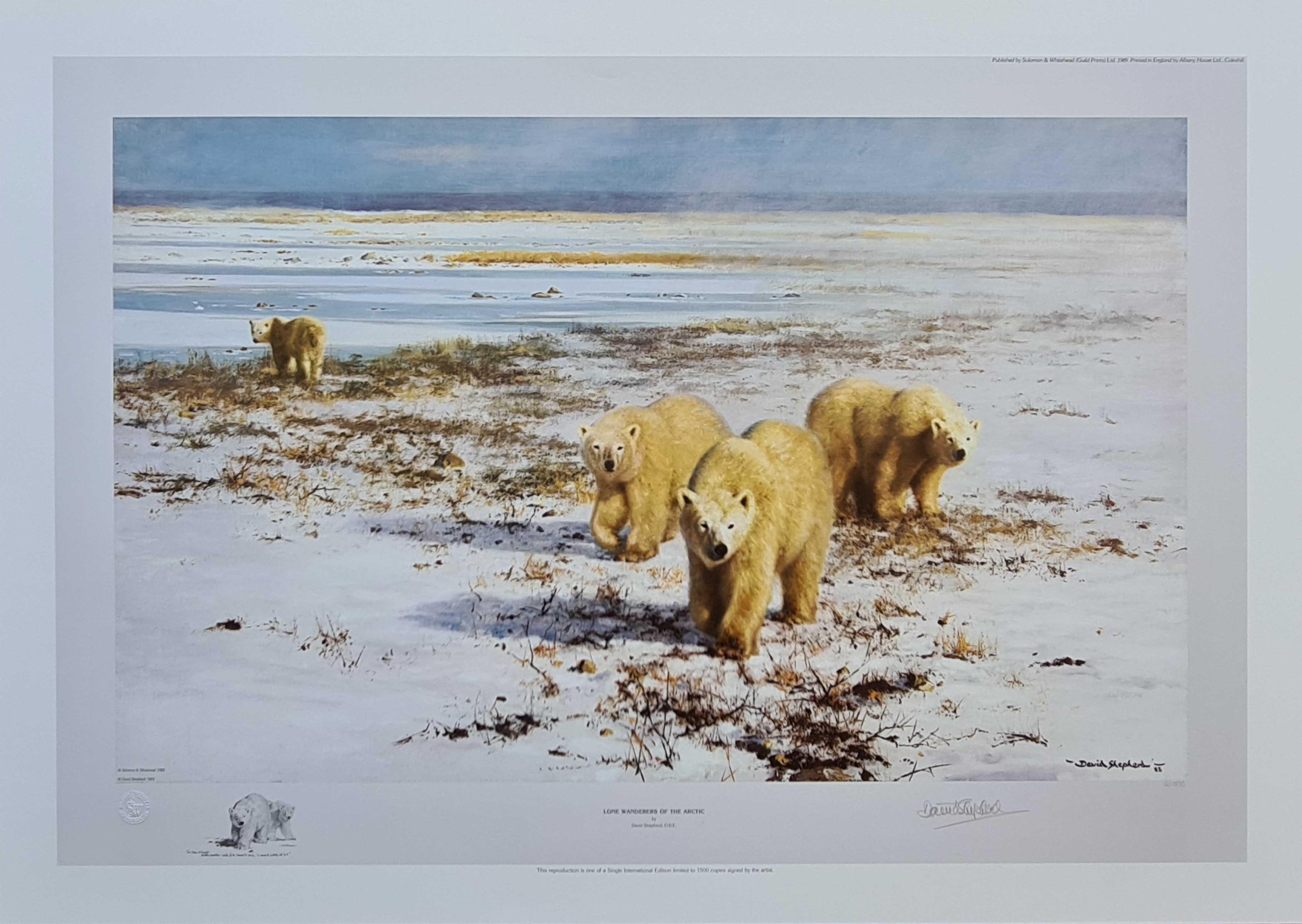 shepherd lone wanders of the arctic polar bears