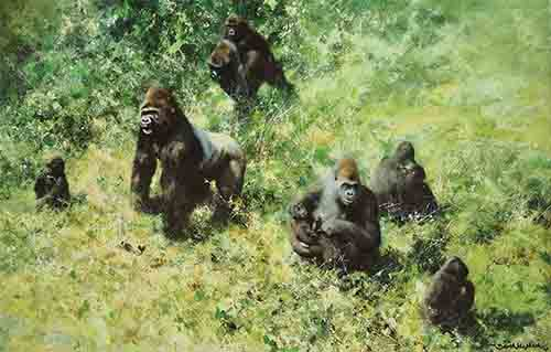 david shepherd lowland gorillas