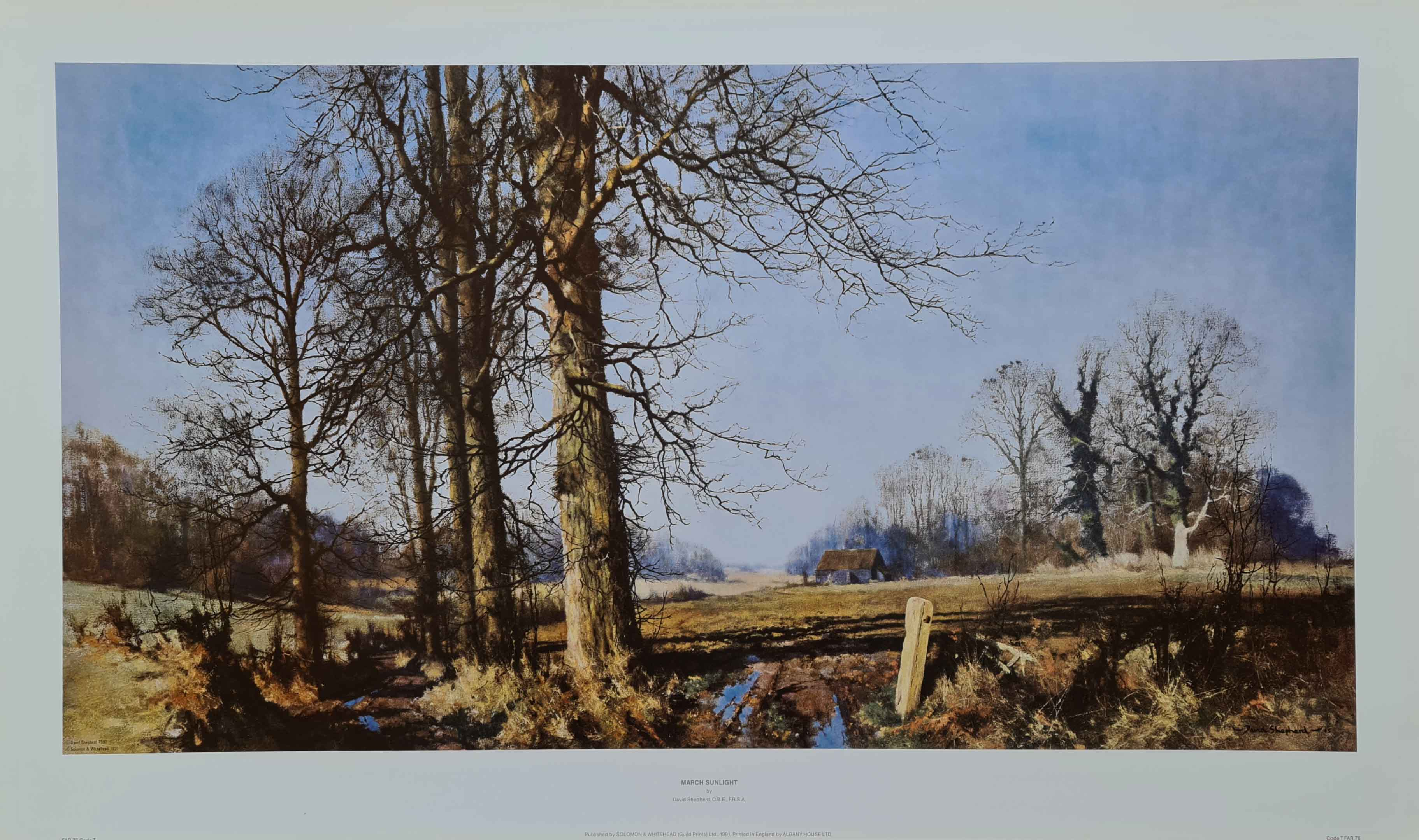 david shepherd March sunlight print