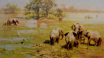 david shepherd mother's meeting elephants print