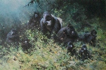 david shepherd gorillas prints