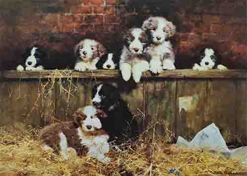david shepherd muffin's pups dogs bearded collies