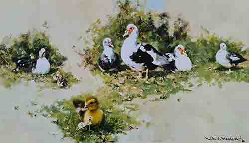 shepherd muscovy ducks signed print