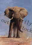 david shepherd my savuti friend temporarily out of stock