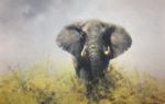 david shepherd old charlie elephants print