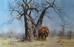 david shepherd old george elephants print
