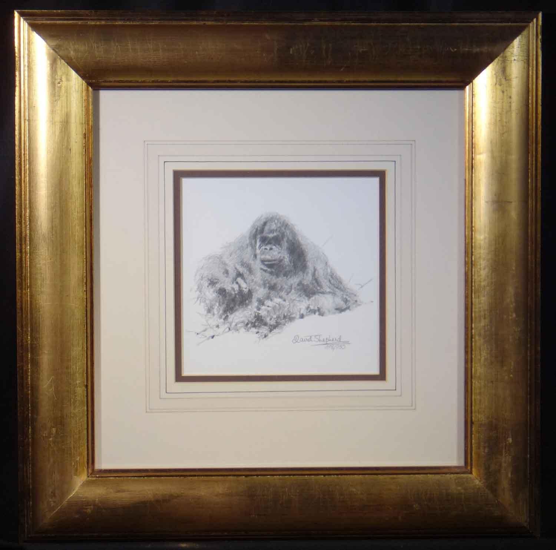david shepherd orang-utan sketch