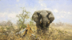 david shepherd original painting african elephant