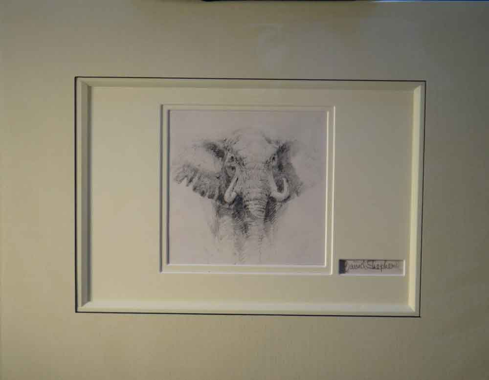 david shepherd elephant original pencil drawing