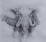 david shepherd original elephant pencil drawing