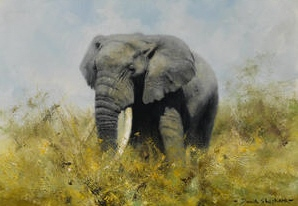 david shepherd, elephant, may 2013, original