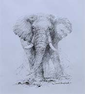 david shepherd original painting Elephant