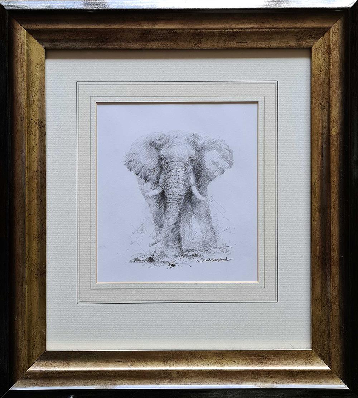 david shepherd , original elephant, drawing