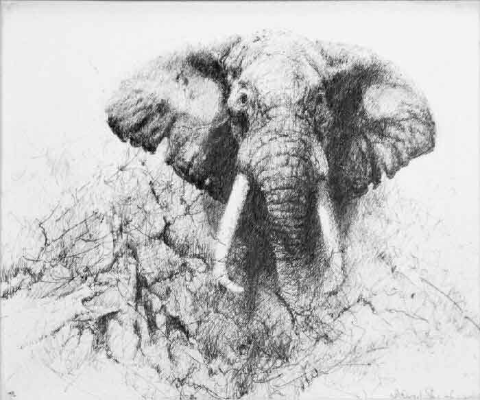 david shepherd elephant, ink, drawing 2