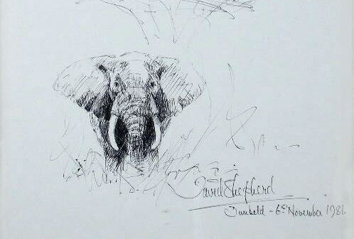 david shepherd elephant, ink, drawing