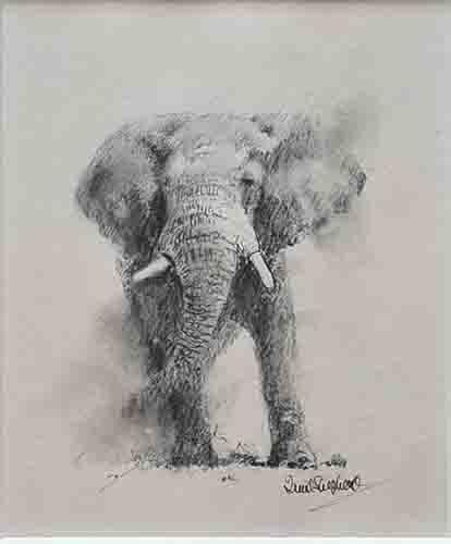 david shepherd, Elephant, drawing
