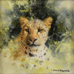 david shepherd original painting, leopard