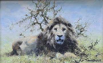 david shepherd, original painting, lion, 2
