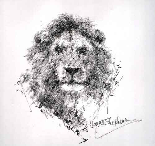 david shepherd lion, pencil sketch