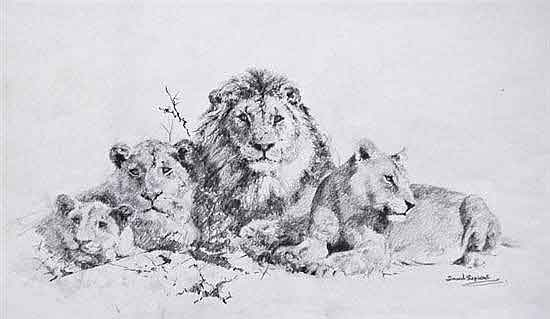 david shepherd lions original drawing