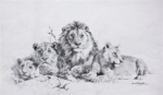 david shepherd original pencil drawing pride of lions