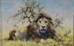 david shepherd, original painting, lion, 2