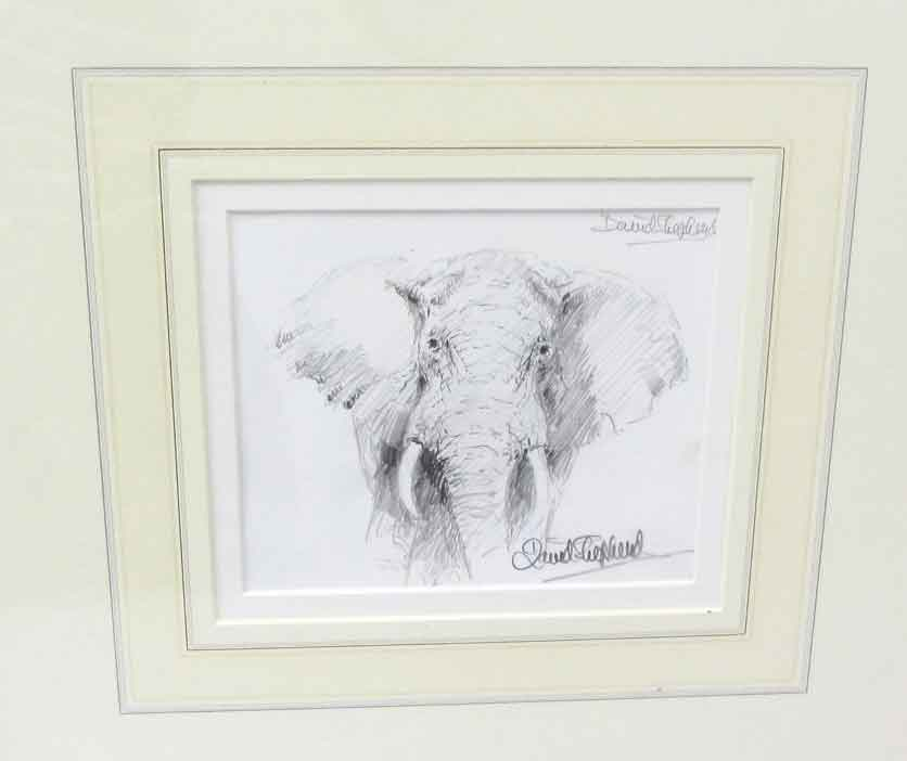 david shepherd pencil elephant drawing