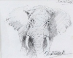 david shepherd original drawing elephant