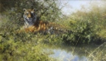 david shepherd, tiger, painting