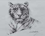 david shepherd, original drawing, tiger