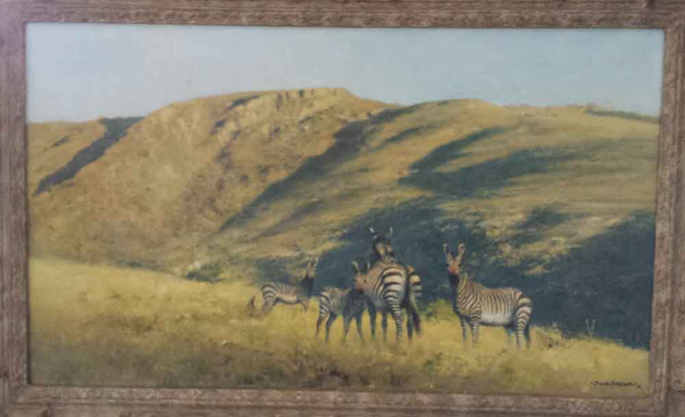 david shepherd zebra original framed