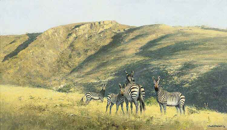 david shepherd zebra original