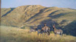 david shepherd original painting landscape with zebra